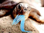 "Campaa de concienciacin  ""Un mar sin basura"""