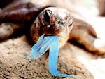 """Campaña de concienciación  """"Un mar sin basura"""""""