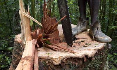 hutan yang dapat digunakan untuk mewujudkan pengelolaan hutan yang