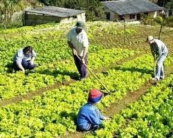 O que é agricultura de jardinagem
