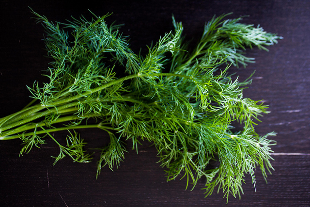 Fresh dill by Liz Mochrie via Flickr, copyright 2014. https://www.flickr.com/photos/lizziemoch/13961980618/