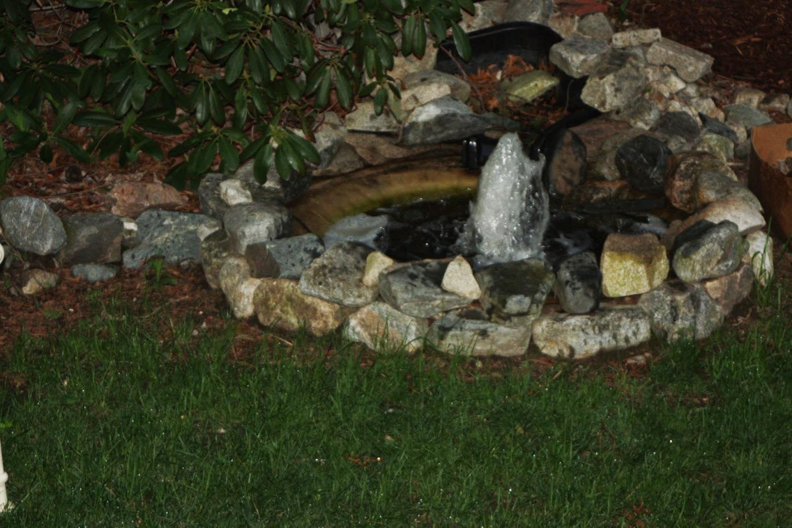 backyard pond diy