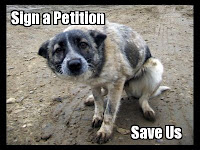 Petition to save stray dogs