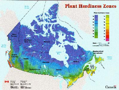 All The Dirt On Gardening Plant Hardiness Zones US Canada - Japan hardiness zone map