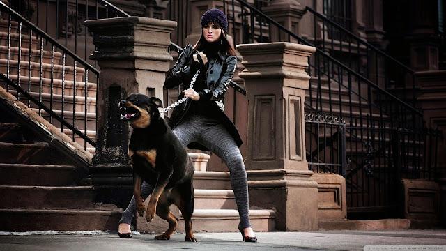 Imagenes de Perros Rottweiler Furioso