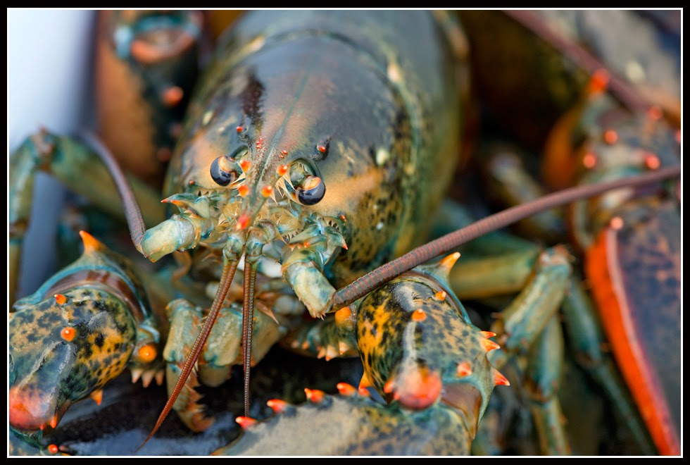 Nova Scotia; Lobster