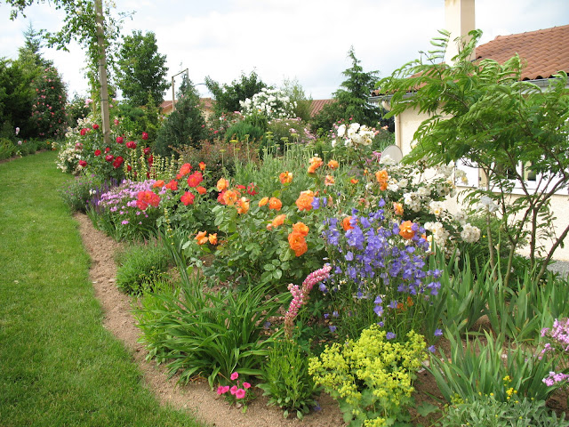 Roses du jardin ch neland rosier westerland for Fleurir son jardin