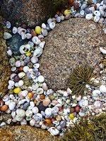 I like shells