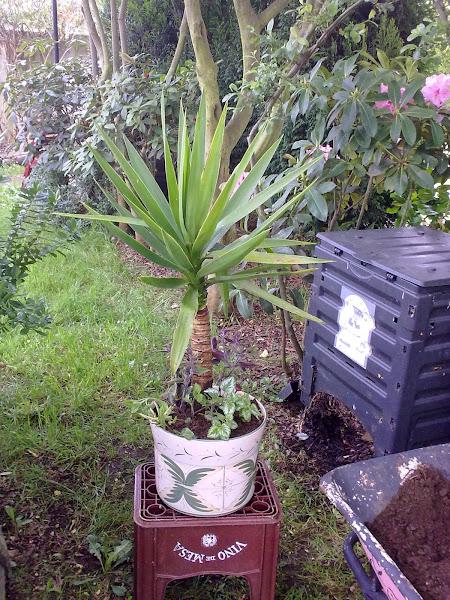 Macetas y jardineras aprender manualidades es for Que plantas poner en una jardinera