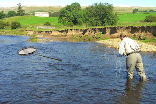 The landing net analogy