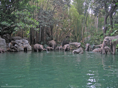 Elephant Bathing Pool Disneyland elephants Jungle Cruise