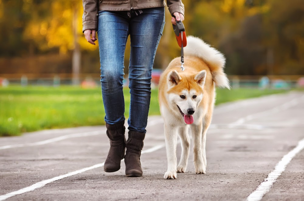 Tips for walking your dog