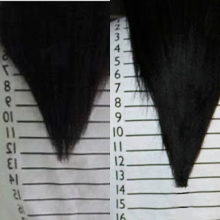 Journey to Waist Length: Grow 1-2 Inches of Hair in 7 Days!!
