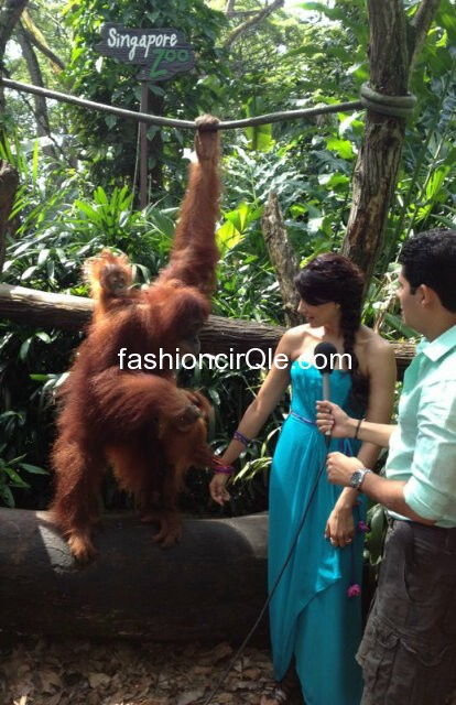 Bipasha Basu in a blue dress petting animals -  Bipasha Basu at zoo in Singapore