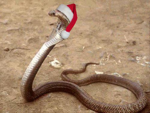 cindy goff blog 10 days of deadly christmas snakes7