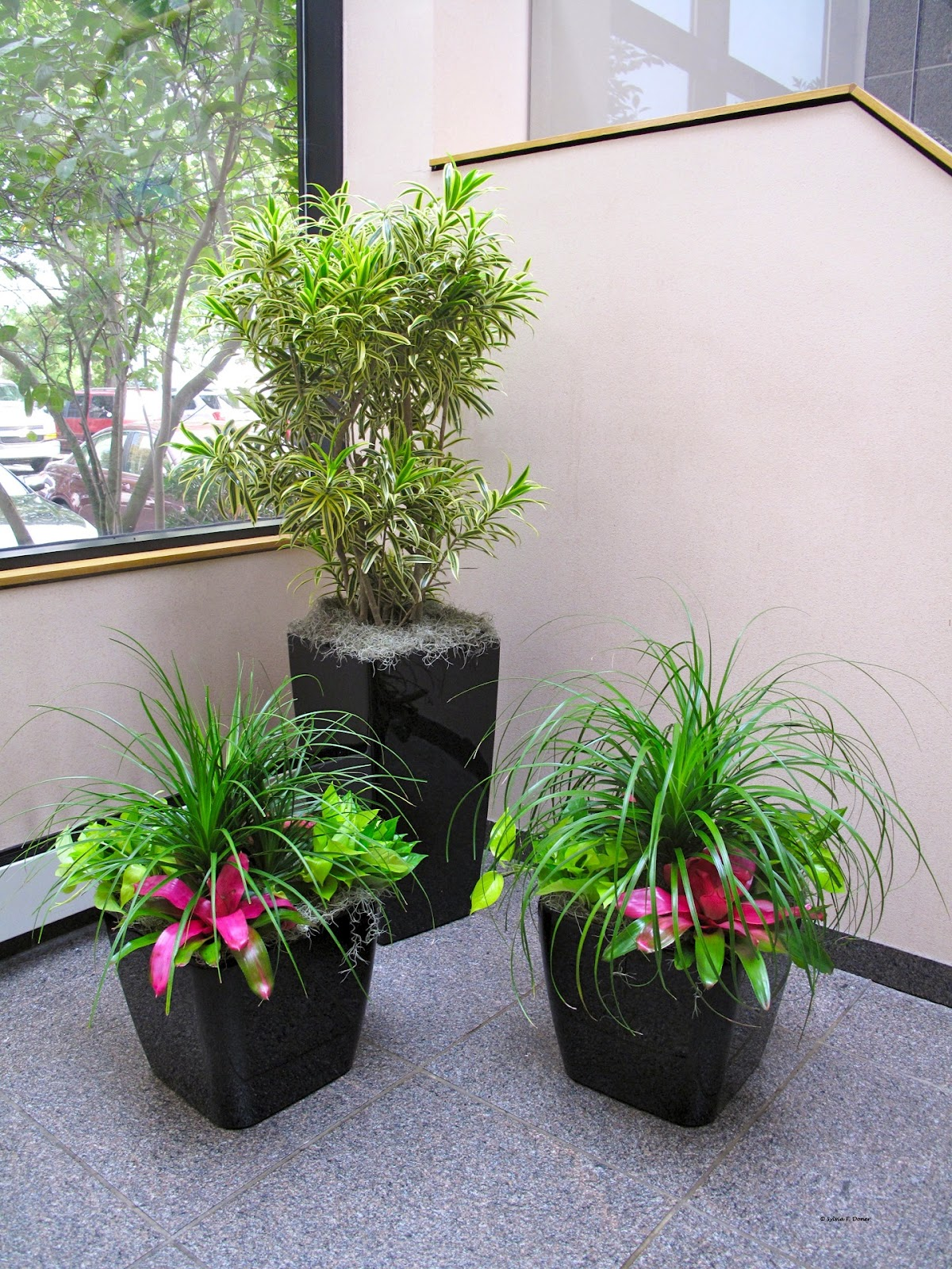 How to properly install interior house plants plants Interior design plants inside house