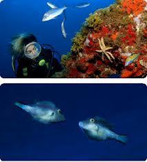 Buceo en Islas Canarias