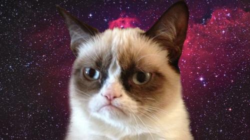 Cat Desktop Backgrounds Background Grumpy Cat on