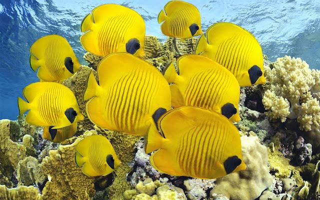 Beautiful yellow fish.