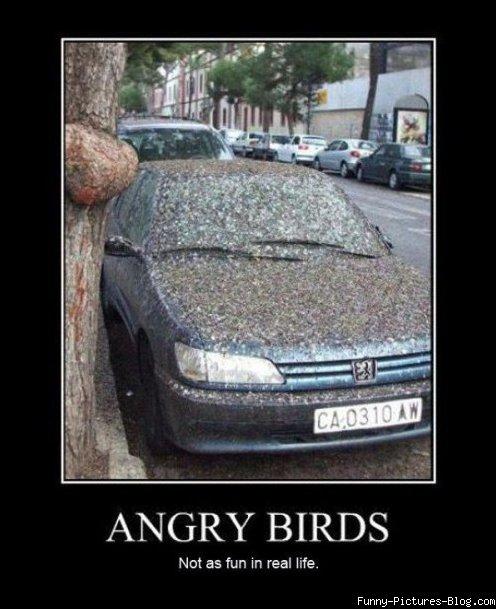 Funny angry bird memes - photo#9