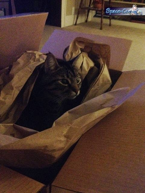 funny cat box picture