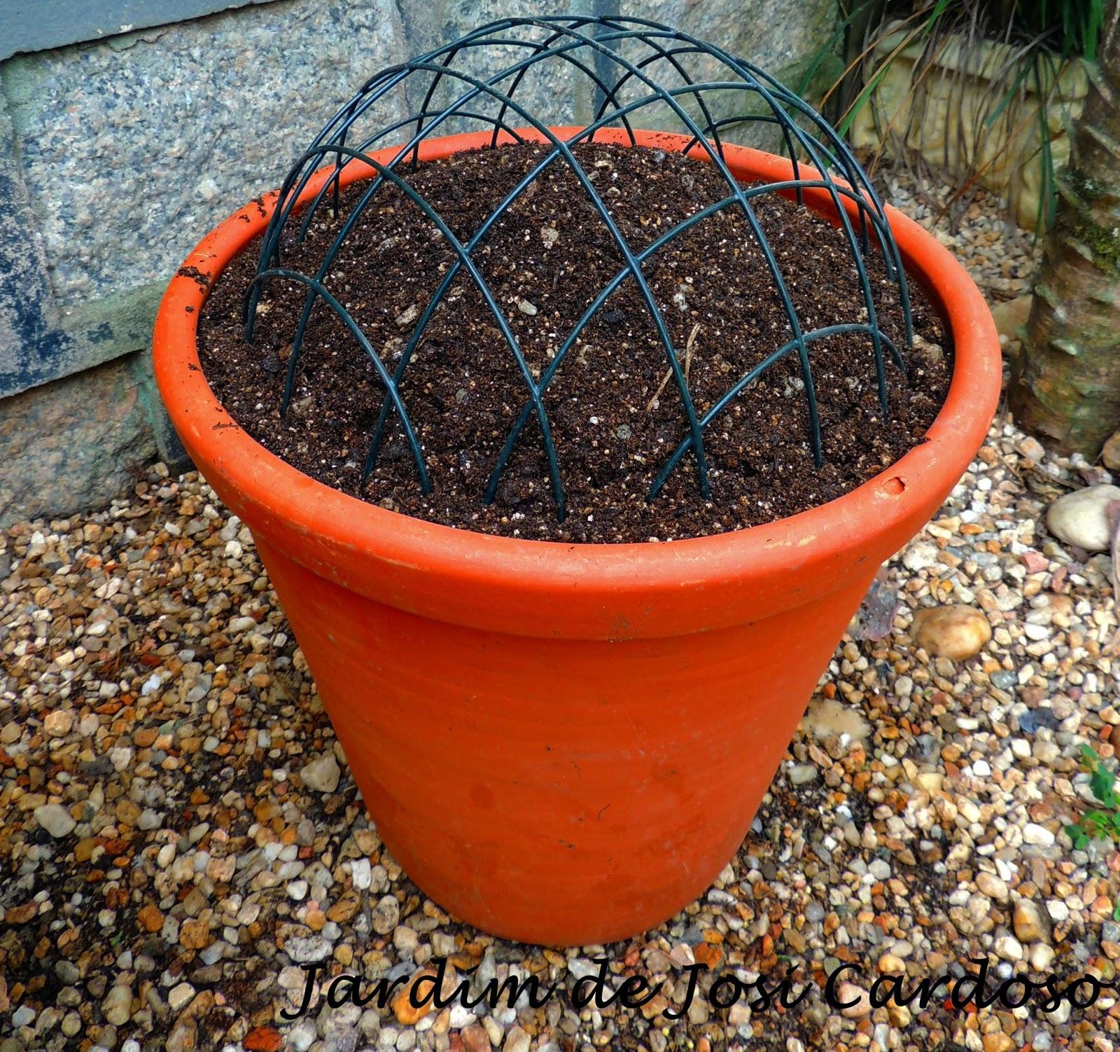 jardim vertical suculentas ? Doitri.com