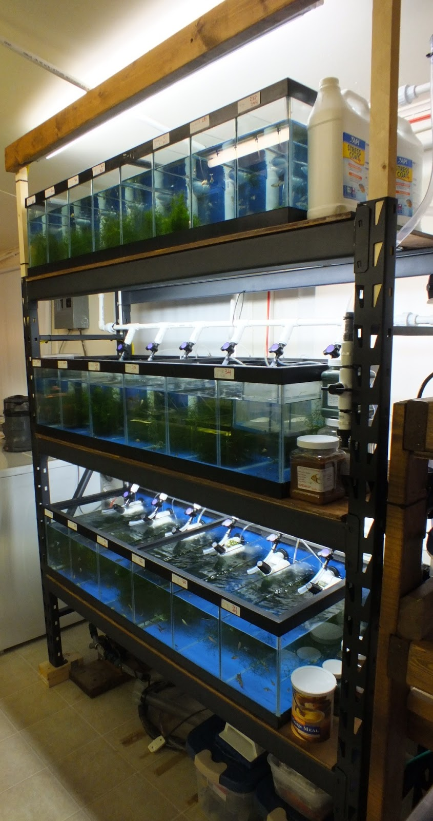Breeding Rack Fully Automated For Water Change And Single Point Filtration