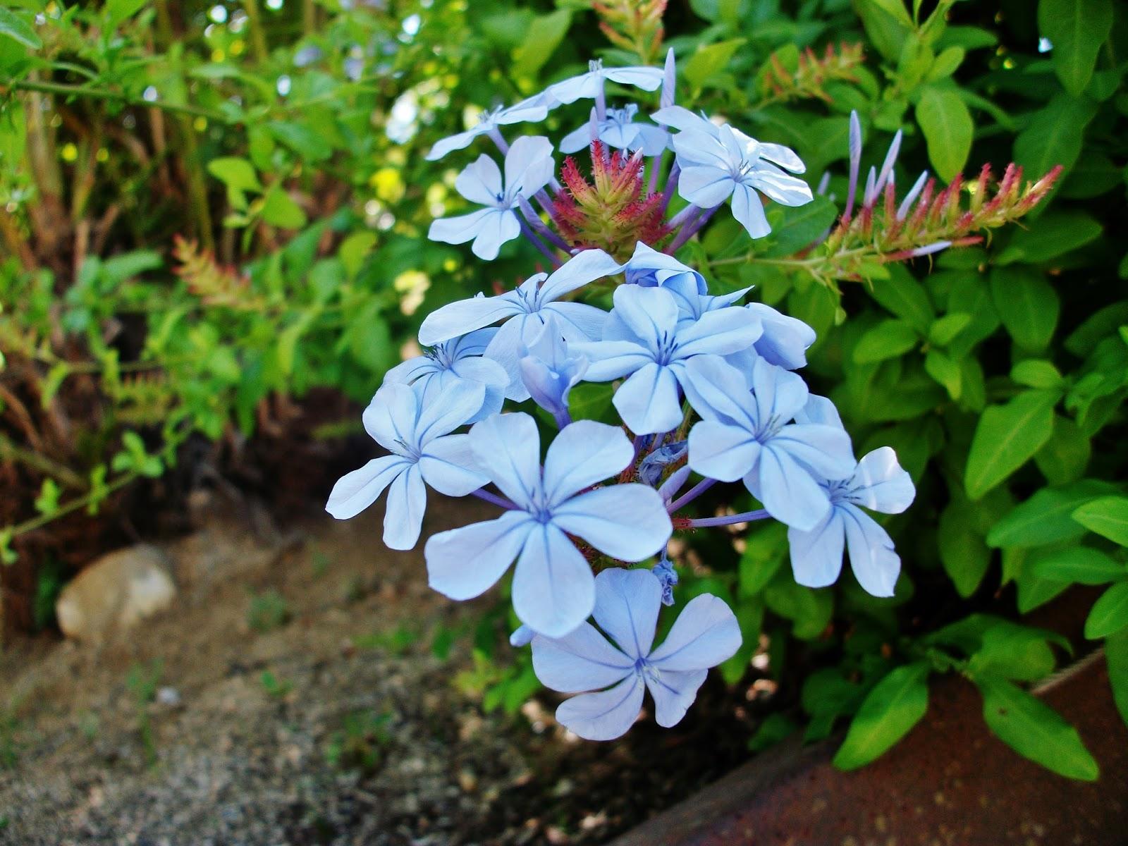 Jard n bot nico de montju c el blog de catalina for Jardin botanico montjuic
