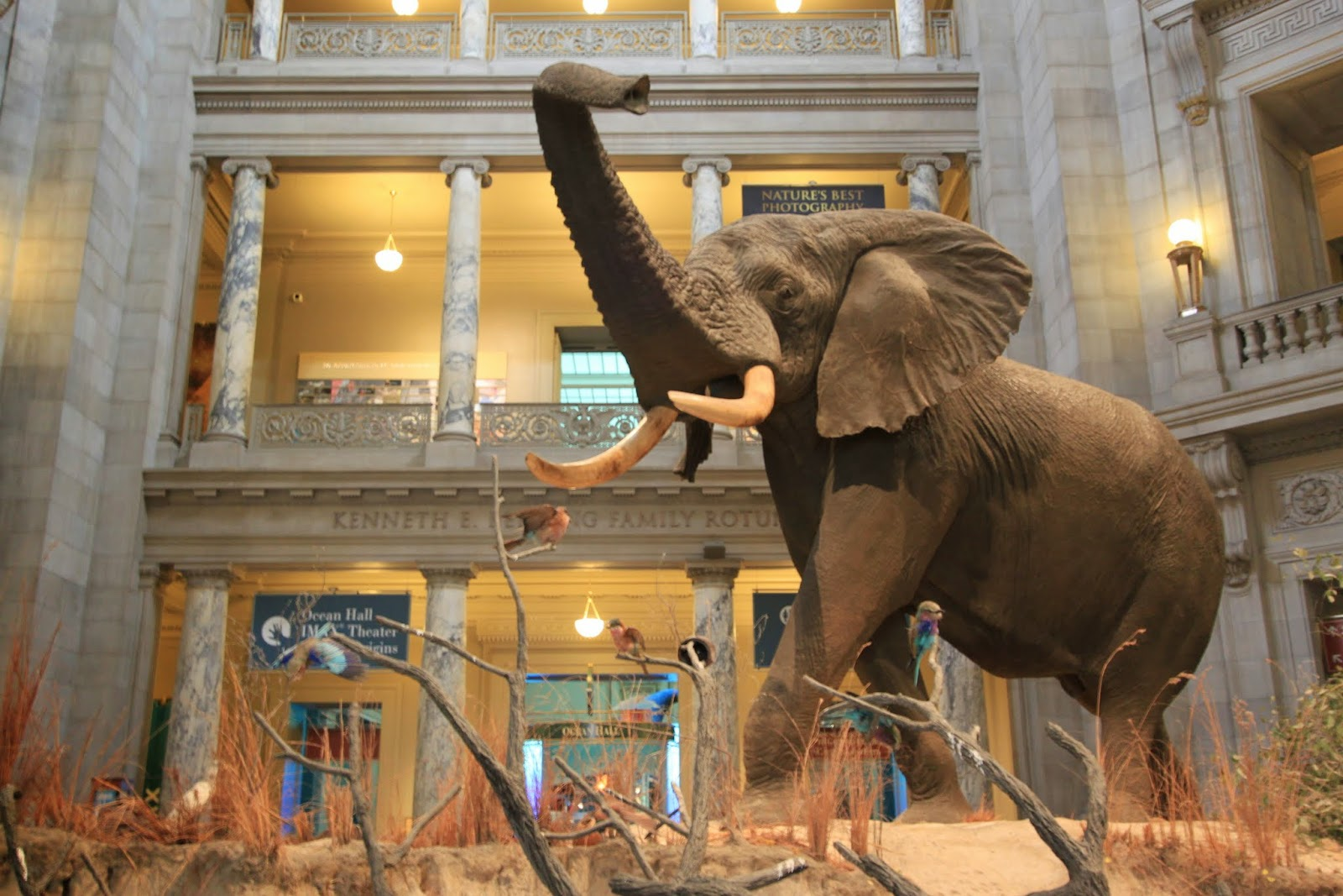 National Museum Of Natural History Washington DC Lense Moments - Best history museums in usa