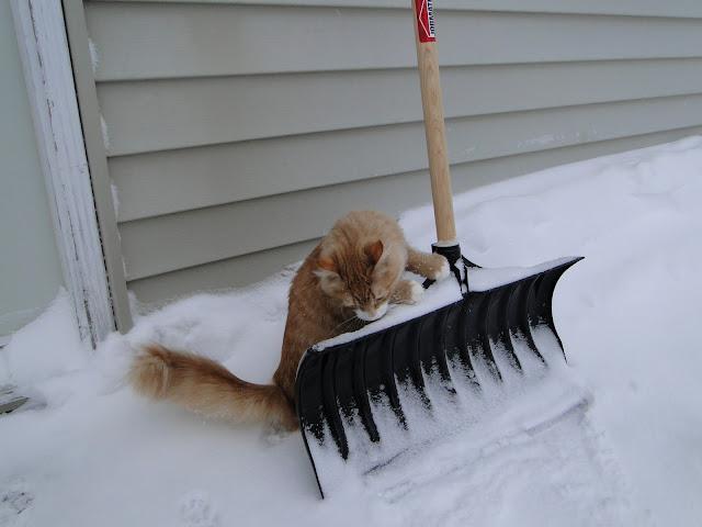 Maybe I will shovel some snow
