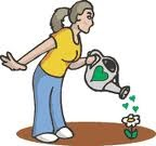 We can water our plants by using rainwater or by the previous water we ...