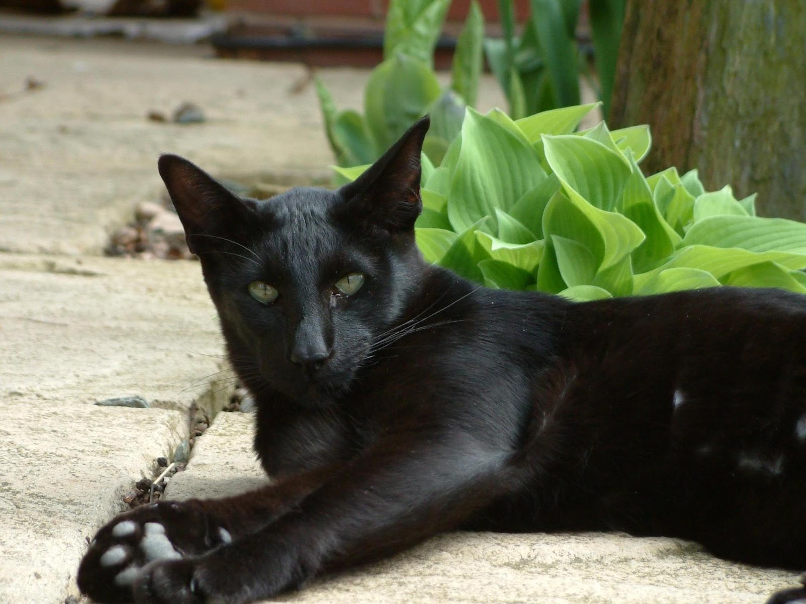 Cat Breeds and Information