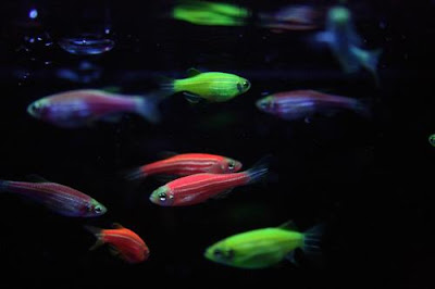 Betta Fish Awareness Day Betta Fish Care The munity #1: tumblr m7nhfyRyV41rbmdvwo1 500