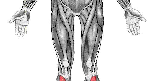 Fisioterapia: El Tibial Anterior