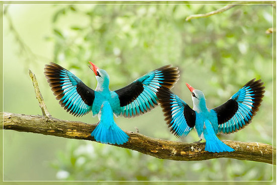 Most Beautiful Flying Birds Hd Images