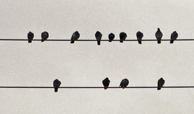 Thirteen blackbirds.