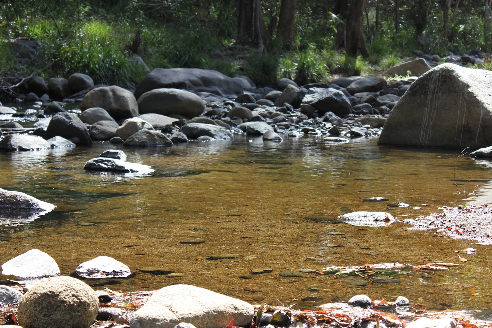 This bamboo life cedar creek samford valley for Ceader creek