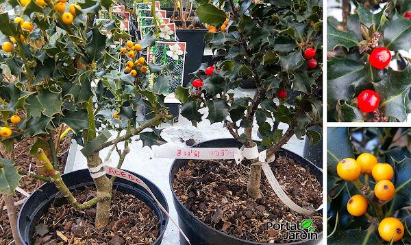 Flores de vivero cuidar de tus plantas es for Arboles ornamentales jardin