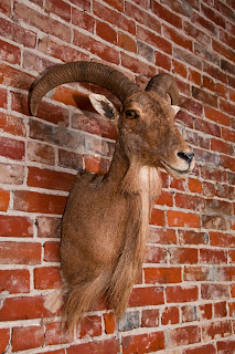 UrbanDwellingsDesign.blogspot.com : Taxidermy Doesn't Have to be a Trophy