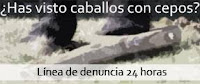 Si has visto caballos con cepos ¡DENUNCIA AQUÍ!