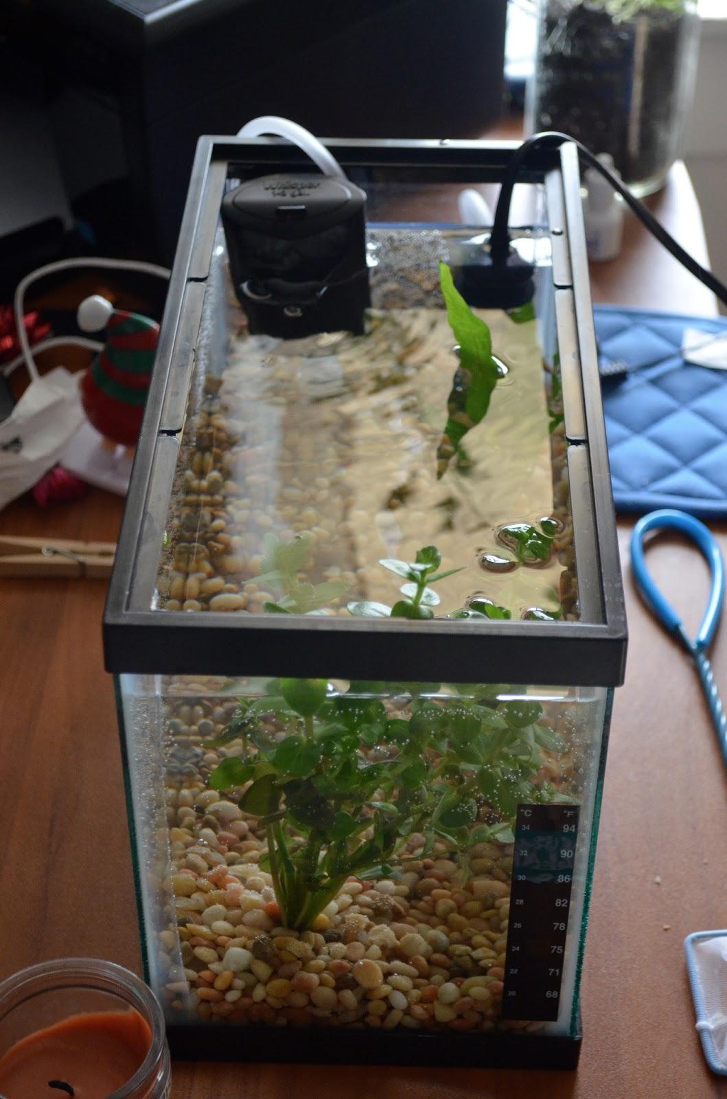 Oh baby betta fish for Fish tank heater petco