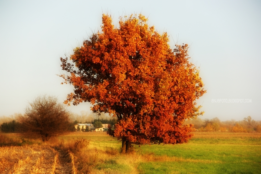 jesień, autumn, drzewo, liście,