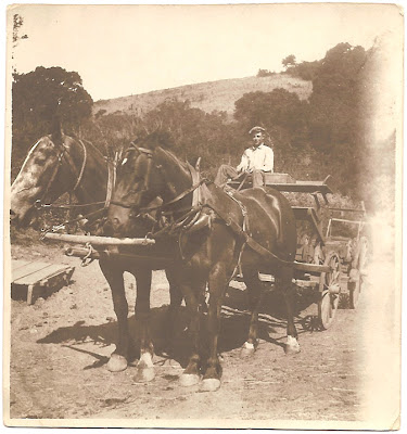 rural farm work with horses in southern California