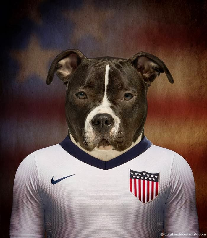 USA – American Staffordshire Terrier
