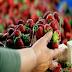 Θεσσαλονίκη: Τα φρούτα που ήθελε να αγοράσει της βγήκαν ''ξινά'' - Στο νοσοκομείο η γυναίκα μετά από άγριο ξύλο!