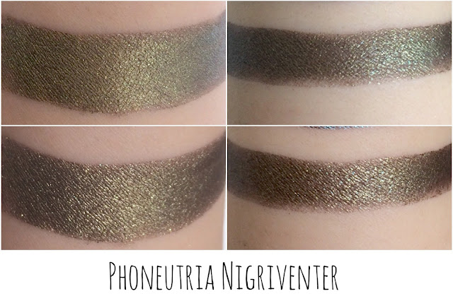 phoneutria nigrivenier