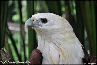 Philippine Eagle Center Davao City
