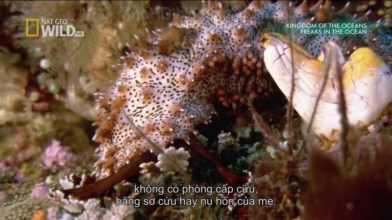 Worlds Weirdest Freaks In The Ocean