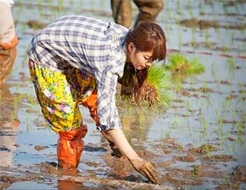 Teknologi Pertanian, Pertanian Berkelanjutan