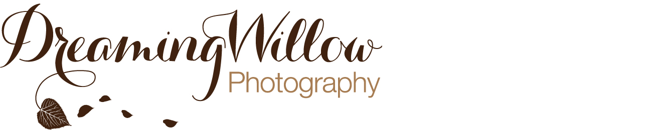 Dreaming Willow Photography